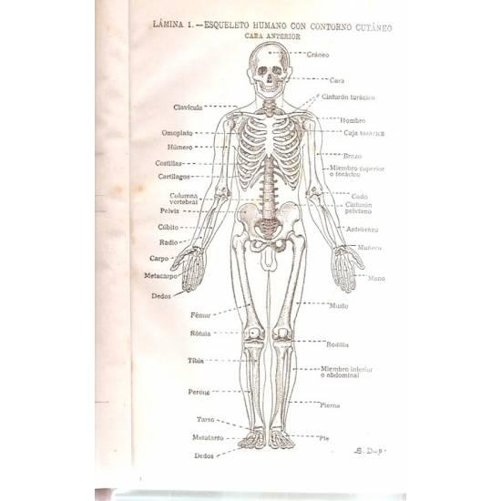 Atlas Manual de Anatomía